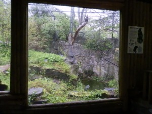 Steller's sea eagle enclosure