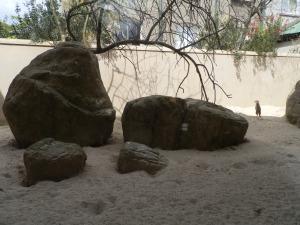 meerkat enclosure