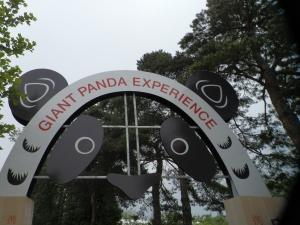 Toronto Zoos Giant Panda Experience