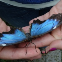 Niagara Park's Butterfly Conservatory