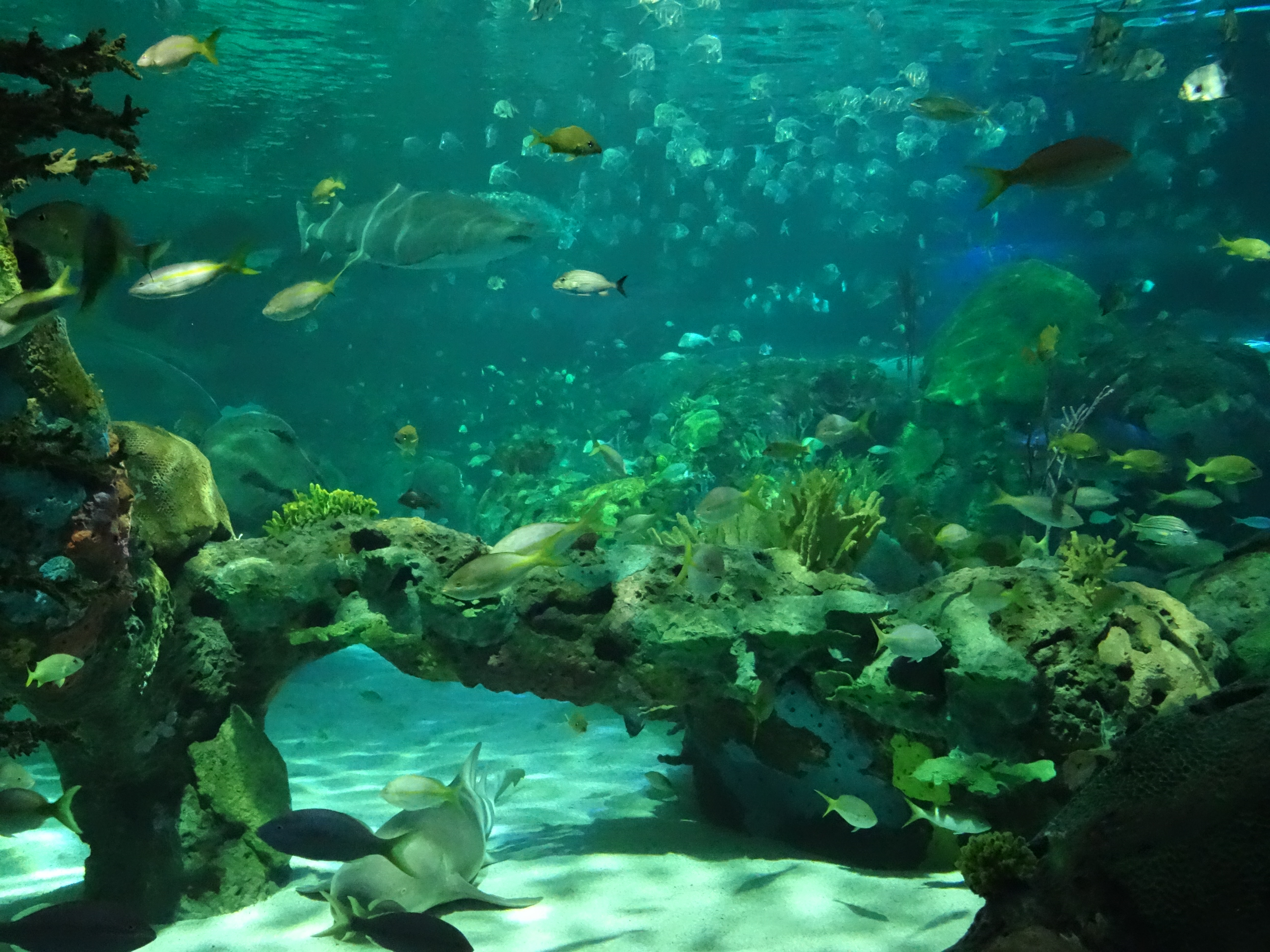 Fish aquarium in canada - Dangerous Lagoon