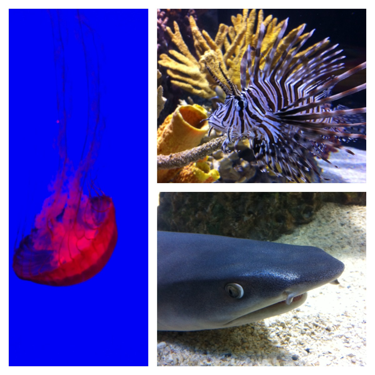 Fish aquarium in canada - Jelly Fish Lionfish Shark
