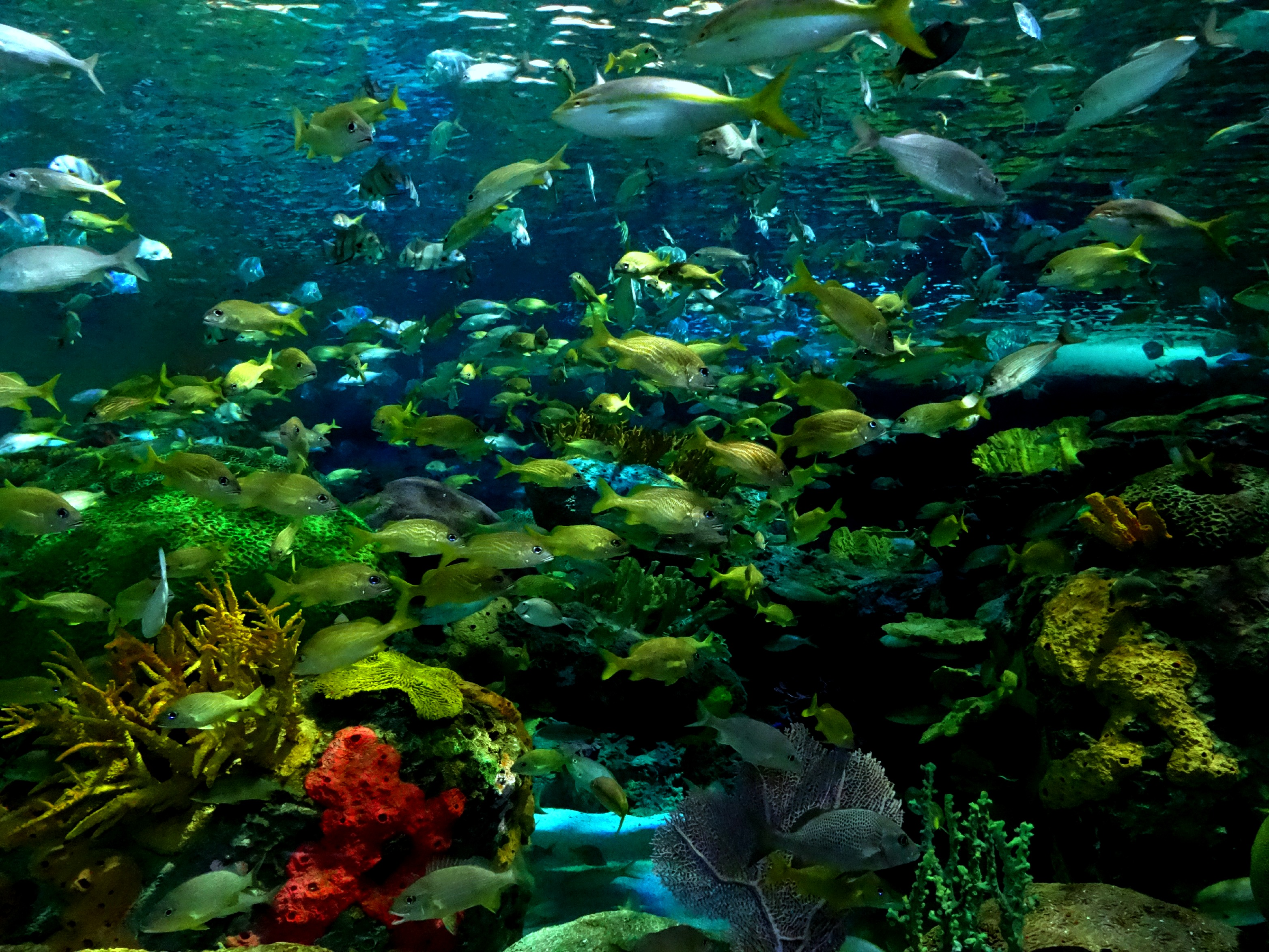 Fish aquarium in canada -  Add Heart Pounding Excitement And A Splash Of Awe And That S What You Ll Find In The Depths Of The Dangerous Lagoon At Ripley S Aquarium Of Canada