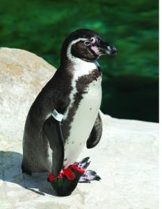 penguin Lucky