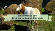 San Francisco Zoo: Savanna to Singing Siamangs