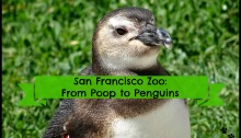 San Francisco Zoo: From Poop to Penguins