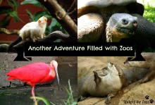 Another Adventure Filled with Zoos