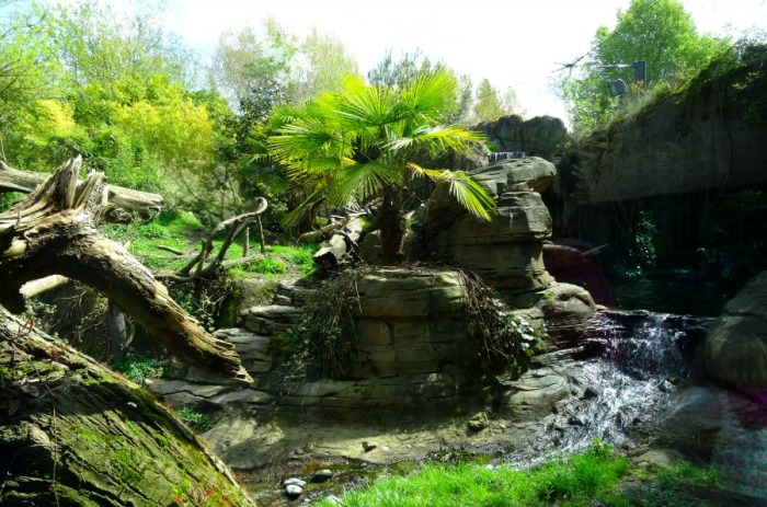 Jaguar habitat