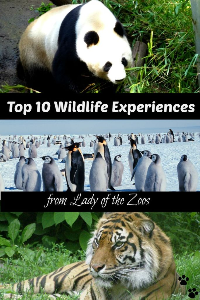 Top 10 Wildlife Experiences