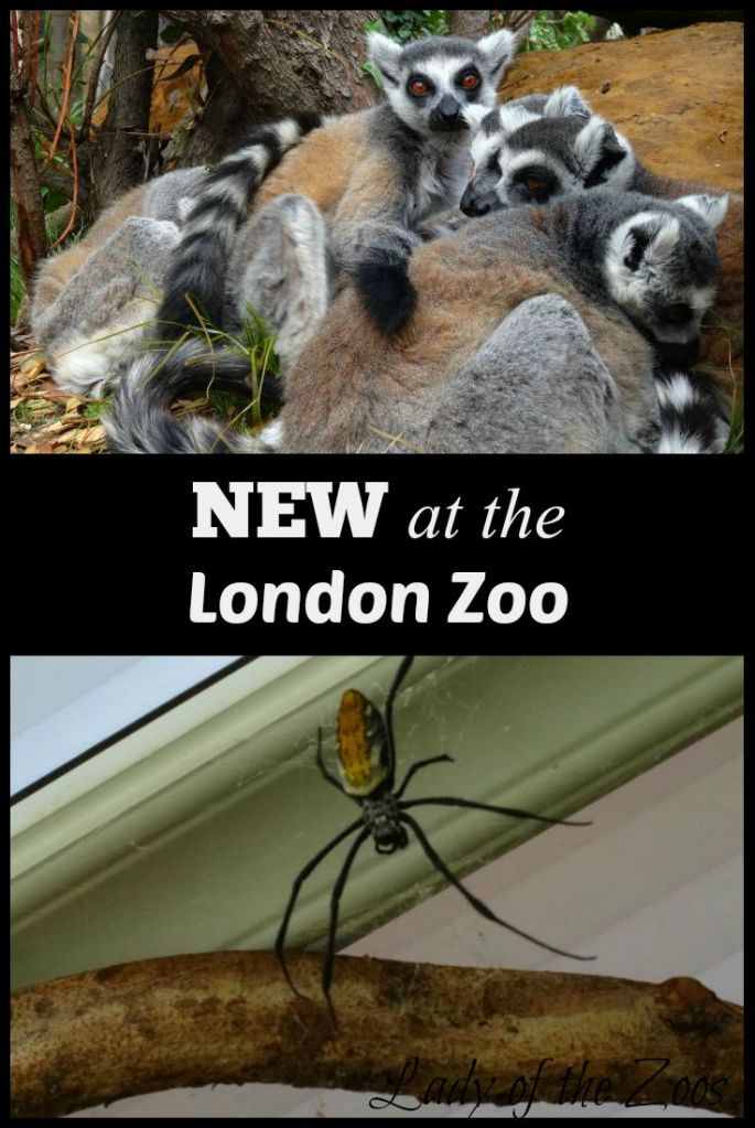 New at the London Zoo
