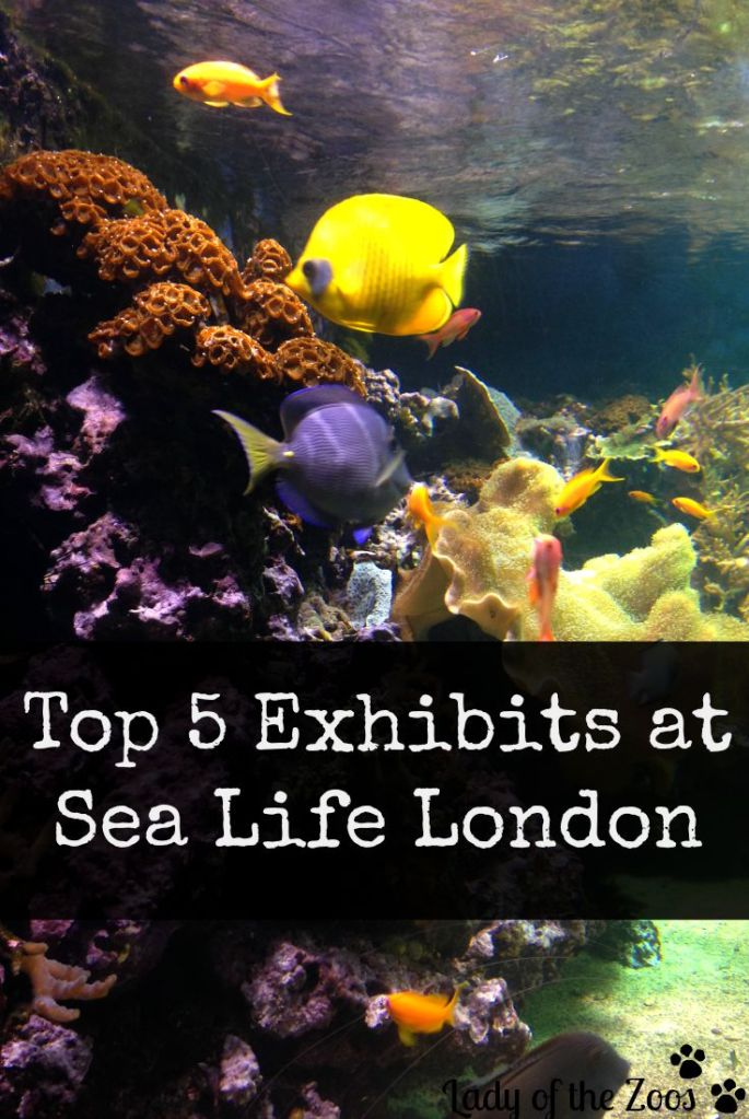 Top 5 Exhibits at London's Sea Life