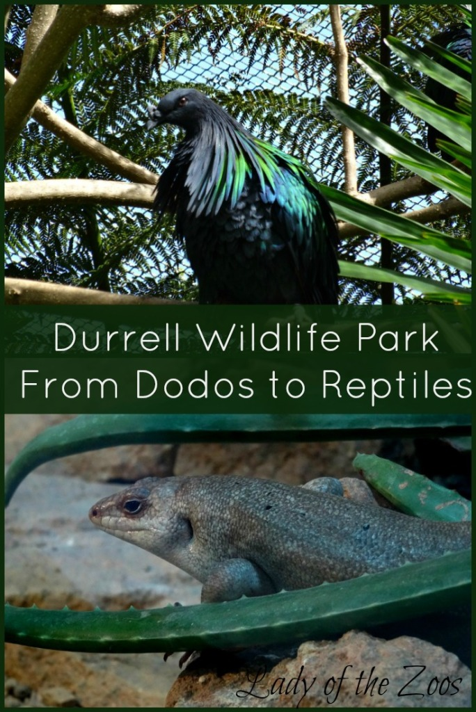 From Dodos to Reptiles