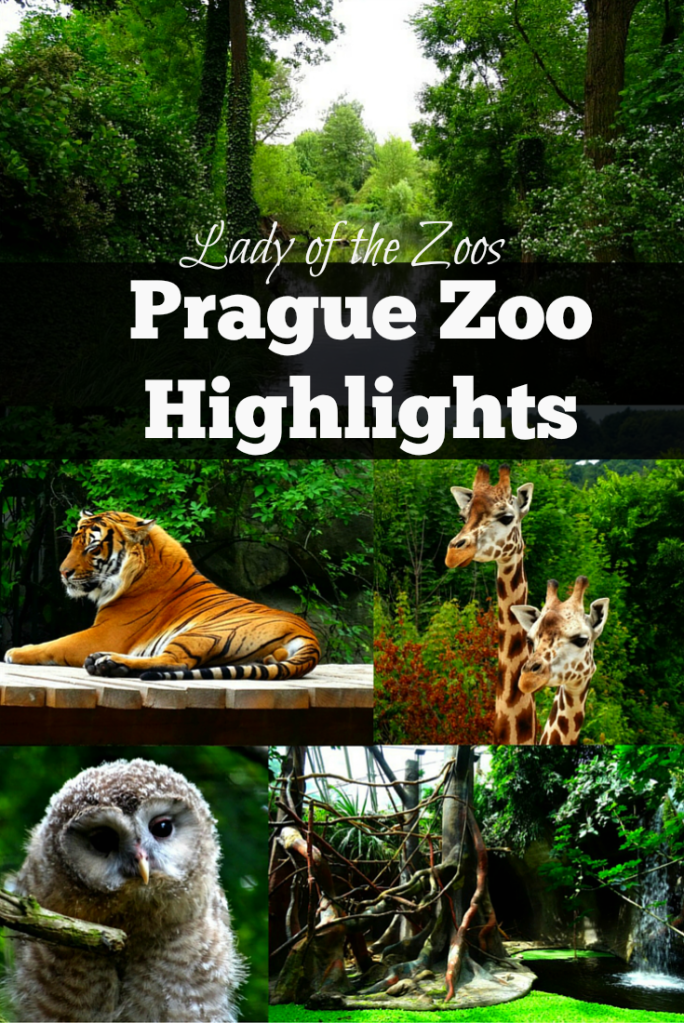 Prague Zoo Highlights