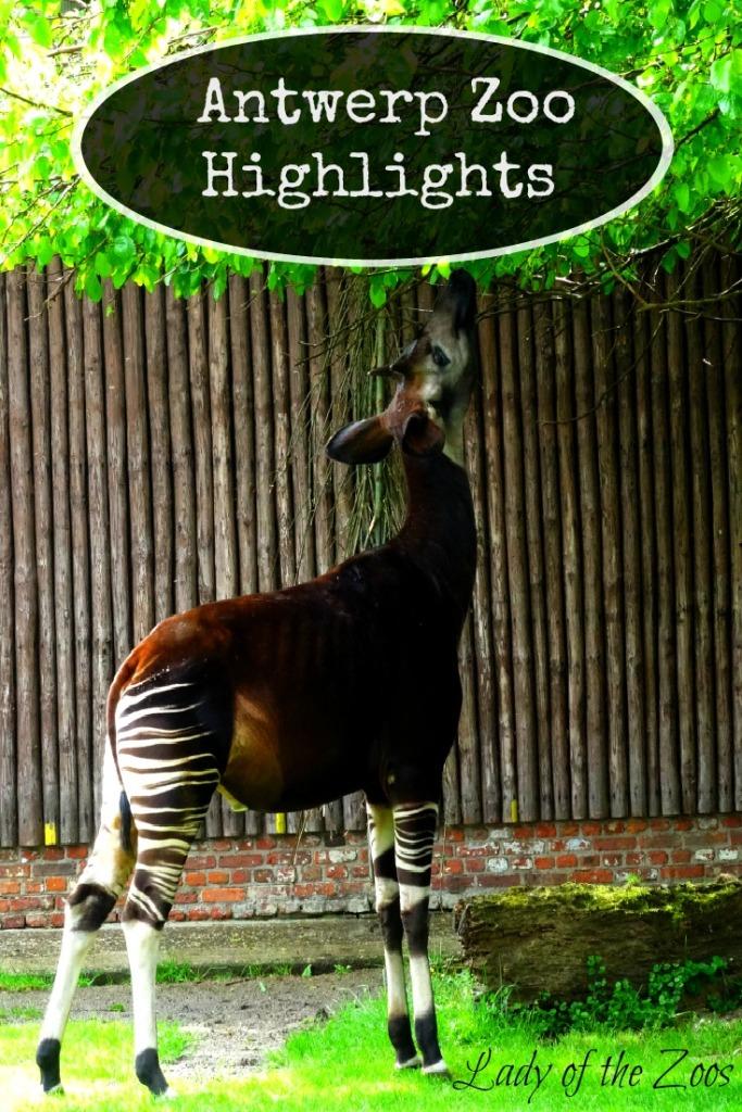 Antwerp Zoo Highlights