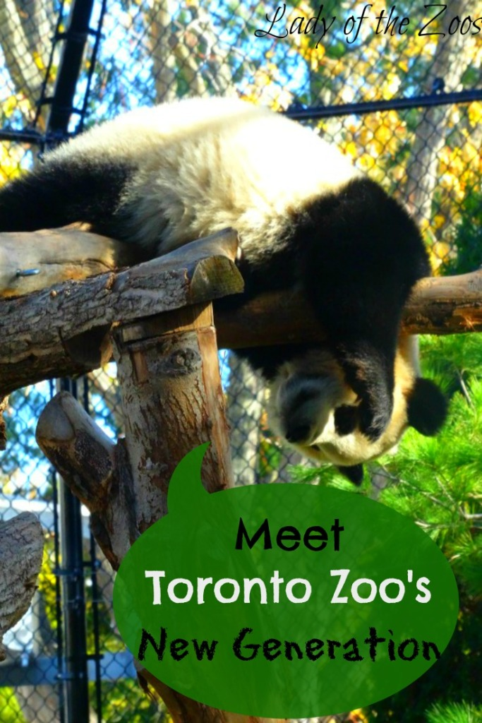 Toronto Zoo's New Generation